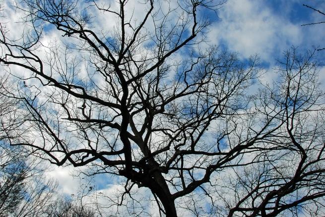 treeblueskyfixresize