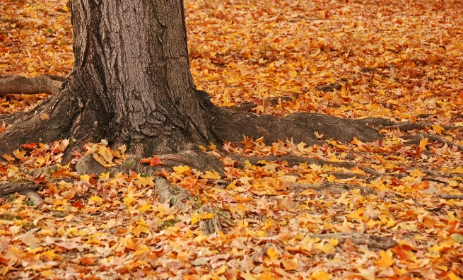 trunk-and-leaves-resize